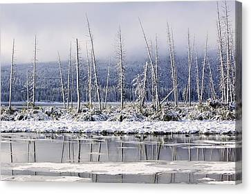 Fresh Snowfall And Bare Trees Canvas Print by Ken Gillespie