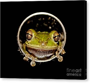 Canvas Print featuring the photograph Frog by Olga Hamilton