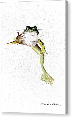 Frog Watercolor Canvas Print - Frog On Waterline by Steven Schultz