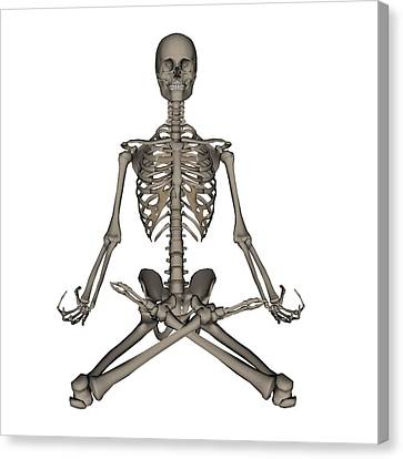 Front View Of Human Skeleton Meditation Canvas Print by Elena Duvernay