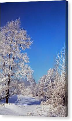 Frost On Trees In Winter Canvas Print by Jim West