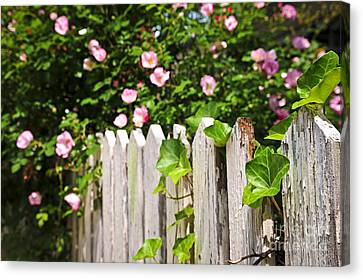 Garden Fence With Roses Canvas Print by Elena Elisseeva