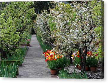 Canvas Print featuring the photograph Garden by Haleh Mahbod
