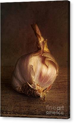 Alliums Canvas Print - Garlic 2 by Elena Nosyreva