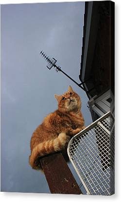 Gatepost Canvas Print - Gate Guard by Turnip Towers
