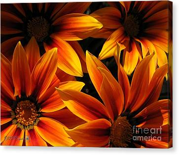 Canvas Print featuring the photograph Gazania Named Kiss Orange Flame by J McCombie
