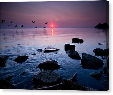 Geese At Sunrise Canvas Print by Cale Best