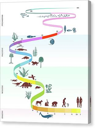 Geological Timescale And Life Canvas Print