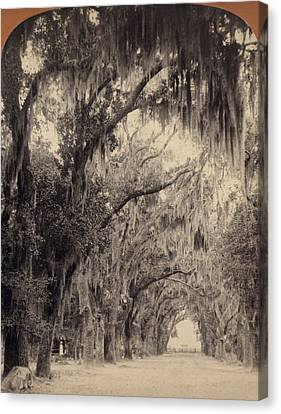 Canvas Print featuring the painting Georgia Oak Trees, C1887 by Granger