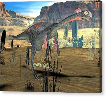 Gigantoraptor Dinosaur Canvas Print by Friedrich Saurer