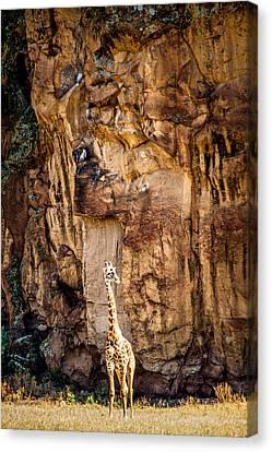 Giraffe Against The Rocks Color Canvas Print by Mike Gaudaur