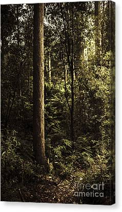 Glengarry Tasmania Bush Forest In Australia Canvas Print by Jorgo Photography - Wall Art Gallery