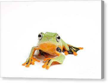Gliding Frog Canvas Print by Scott Linstead