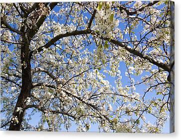Glimpse Of Spring Canvas Print by Heidi Smith