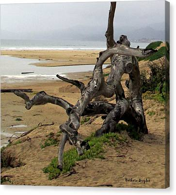Gnarley Tree Canvas Print by Barbara Snyder
