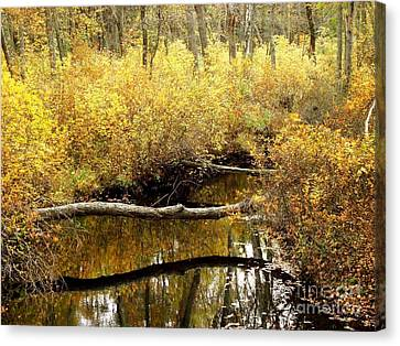 Golden Creek Canvas Print