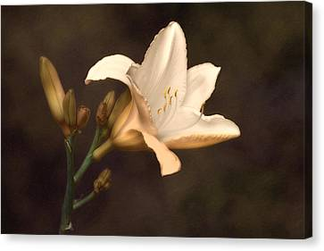 Stamen Canvas Print - Golden Daylily by Tom Mc Nemar