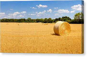 Golden Harvest Canvas Print by Roger Gallamore