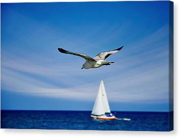 Flying Seagull Canvas Print - Good Karma by Laura Fasulo