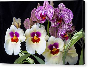 Gorgeous Orchids Canvas Print by Garry Gay