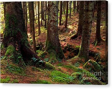 Gortin Glen Forest Park Canvas Print by Thomas R Fletcher
