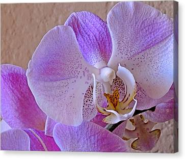 Grace And Elegance Canvas Print by Lynda Lehmann