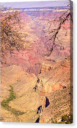 Grand Canyon 33 Canvas Print by Douglas Barnett