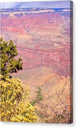 Grand Canyon 35 Canvas Print by Douglas Barnett