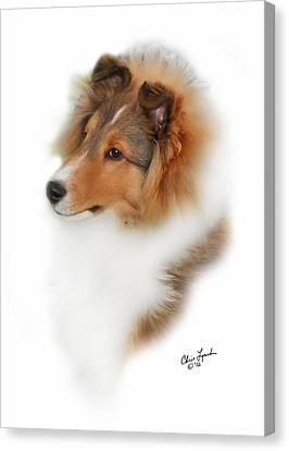 Shetland Sheepdog Canvas Print - Granite Gables Cruise Control by Chris Lynch