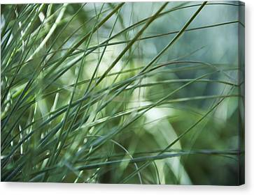Grass Abstract Canvas Print by Sabina  Horvat