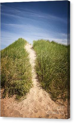 Grass On Sand Dunes Canvas Print
