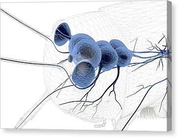 Grasshopper Brain Canvas Print