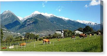 Grazing Cows  Canvas Print by Giuseppe Epifani