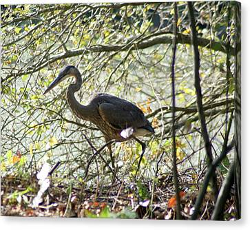 Canvas Print featuring the photograph Great Blue Heron In Bushes by Karen Silvestri