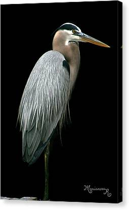 Canvas Print featuring the photograph Great Blue Heron by Mariarosa Rockefeller