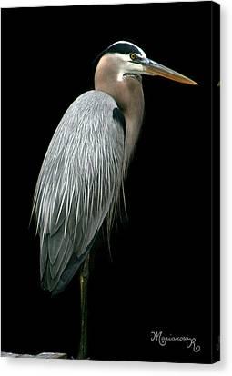 Great Blue Heron Canvas Print by Mariarosa Rockefeller