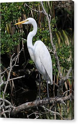 Great Egret Perched In Fallen Tree Canvas Print