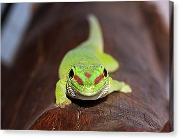 Green Day Gecko Canvas Print