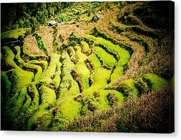 Nepal Canvas Print - Green Field In Nepal  by Raimond Klavins