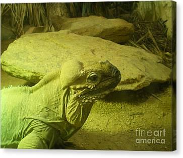 Green Iguana  Canvas Print by Ann Fellows