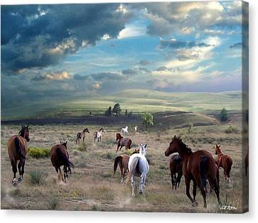 Greener Pastures Canvas Print by Bill Stephens