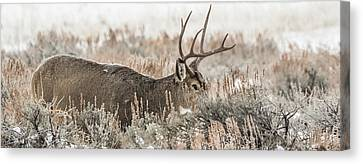 Greeting A Frosty Dawn Canvas Print by Yeates Photography