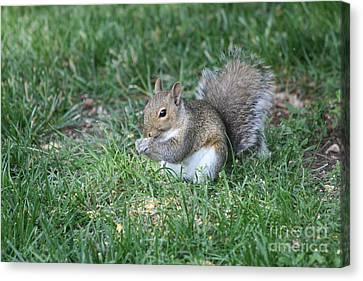 Grey Squirrel Canvas Print by Lori Tordsen