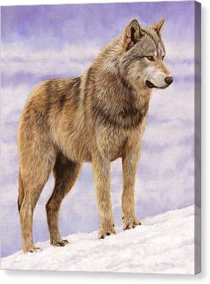 Wolf Canvas Print - Grey Wolf by David Stribbling