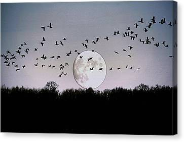 Guided By The Moon Canvas Print by Larry Trupp