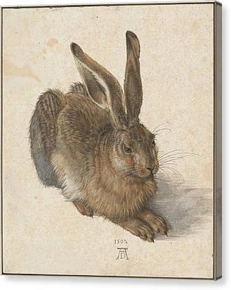 Young Hare Canvas Print by Albrecht Durer