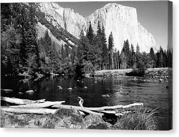 Half Dome In Yosemite In October Canvas Print by Barbara Snyder