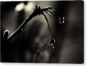 Hand Of Nature Canvas Print by Jessica Shelton