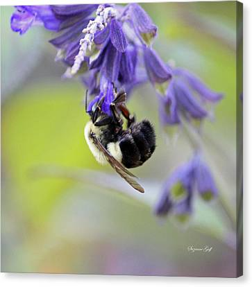 Hanging In There Canvas Print by Suzanne Gaff
