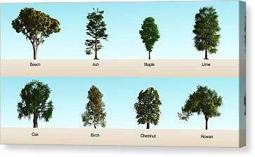 Hardwood Trees Canvas Print